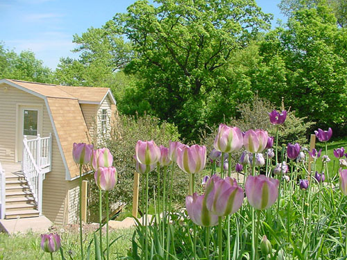 A view of the Garden Shed through budding flowers